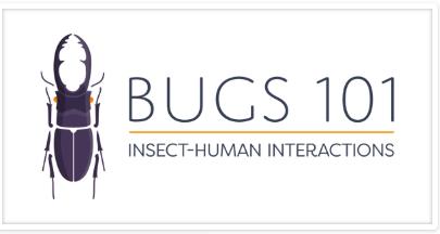 Bugs 101 post thumbnail image