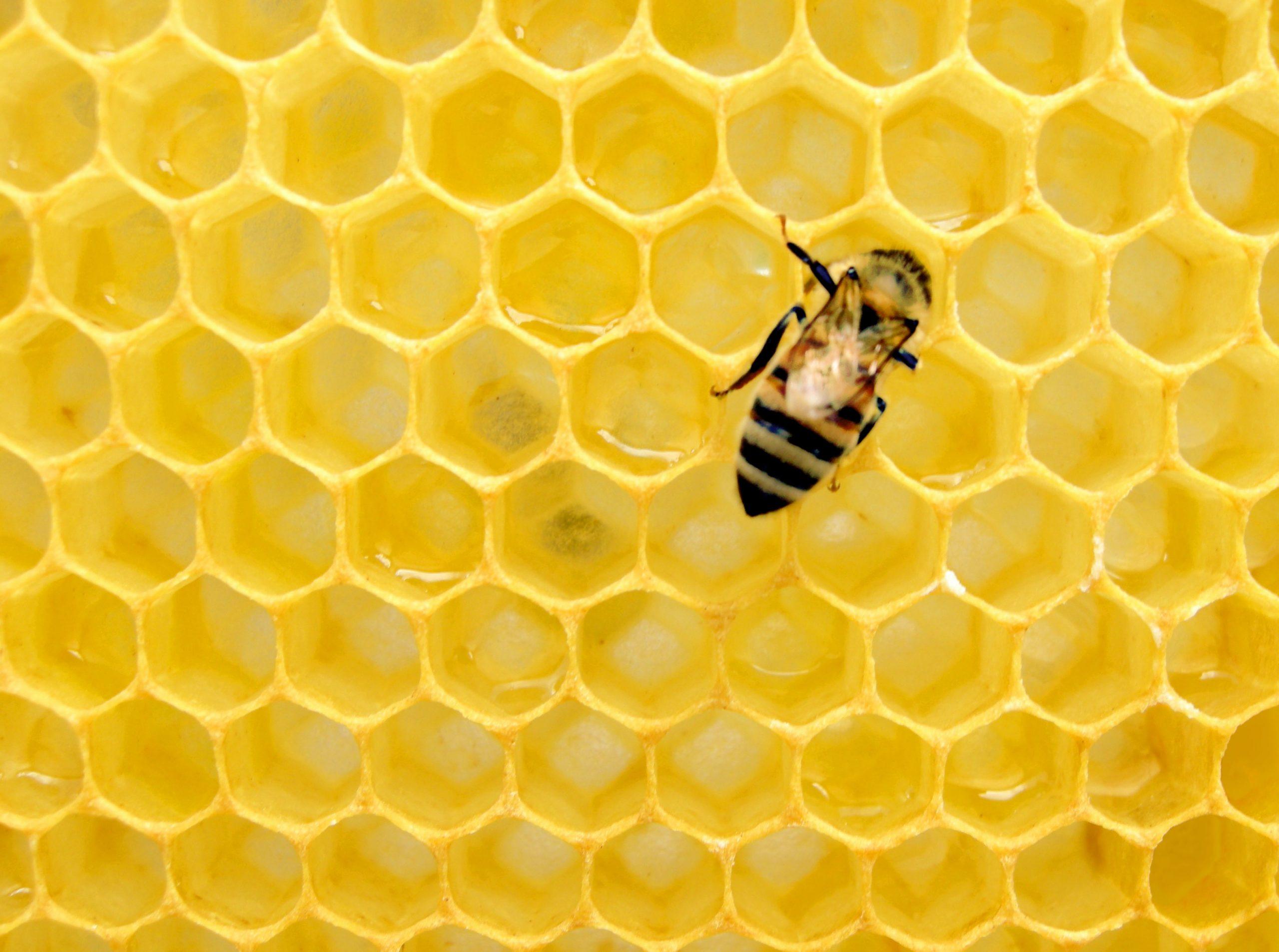 Bee Salute!